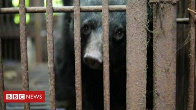 Photo of Moon bears: Korean campaigners call for farm closures