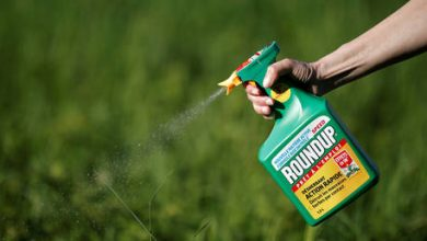 Photo of Violation of Bayer's free speech? Boom Bust explores why California blocked cancer warning labels for Roundup weed killer