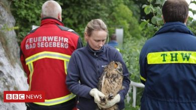 Photo of Rescuer abseils down well to save trapped owl