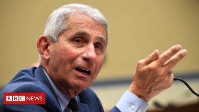 Photo of Coronavirus: Dr Fauci says daughters have been harassed