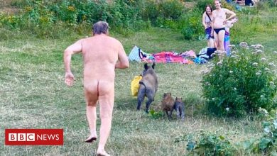 Photo of Cheeky boar leaves nudist grunting in laptop chase