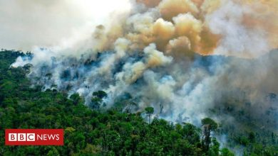 Photo of Amazon fires: Are they worse this year than before?