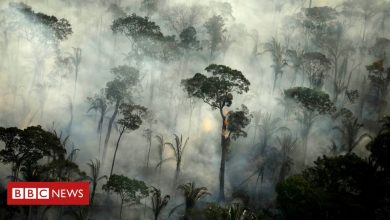 Photo of Amazon region: Brazil records big increase in fires