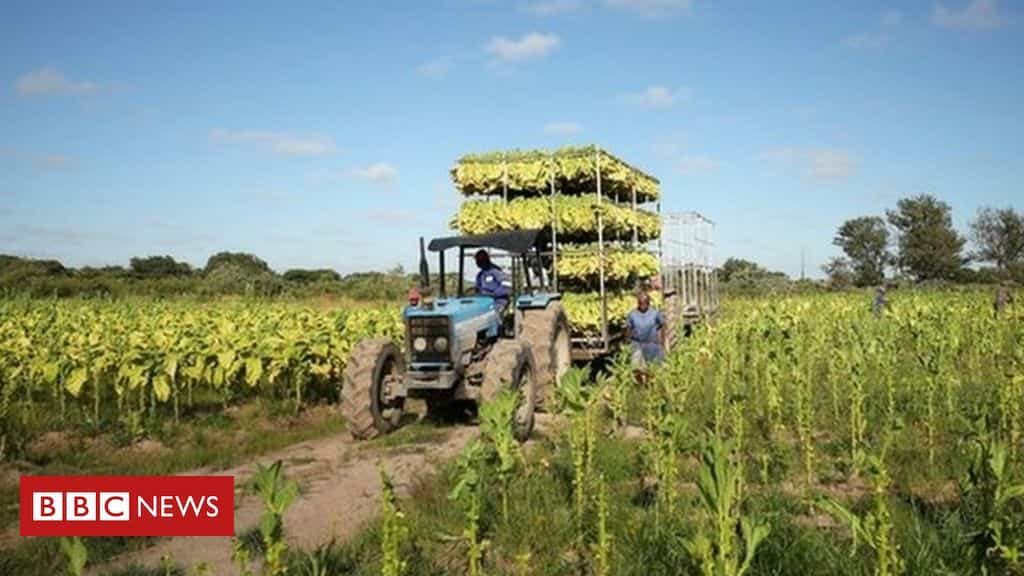 zimbabwe-to-return-land-seized-from-foreign-farmers