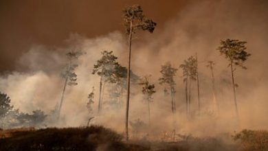 Photo of US wildfires: What are the health risks of smoke pollution?