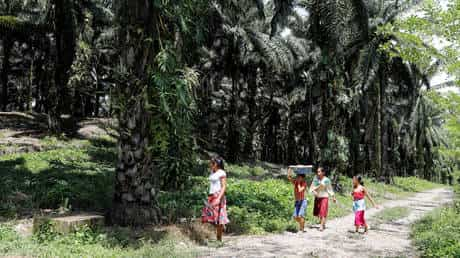 major-banks,-food-&-cosmetics-brands-linked-to-massive-abuses-in-palm-oil-industry-–-report