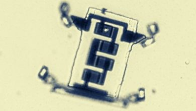 Photo of Scientists create a microscopic robot that 'walks'