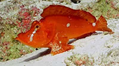 great-barrier-reef:-uncovering-the-secrets-of-australia's-deep-waters