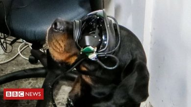 Photo of US Army trials augmented reality goggles for dogs