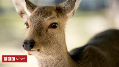 Photo of Japan gets deer-friendly bags to stop animals eating plastic