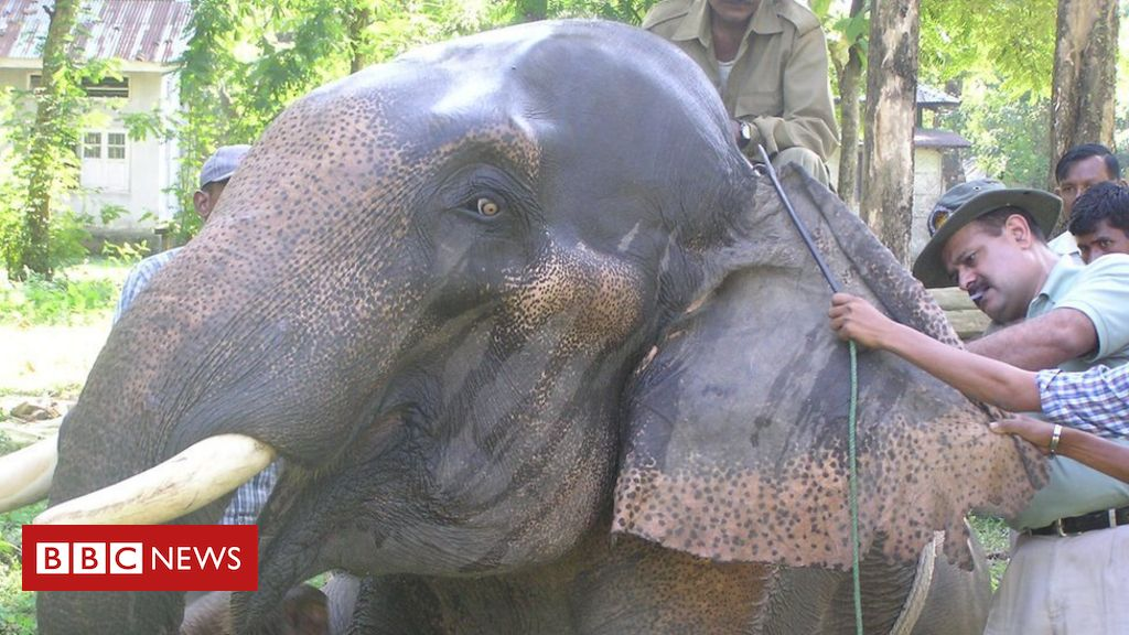 the-indian-doctor-taking-care-of-thousands-of-elephants