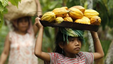 Photo of Most of world's chocolate comes from labor of 1.5 MILLION children, some as young as FIVE – study