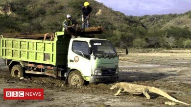 Photo of Viral photo sparks concerns about Indonesia's 'Jurassic Park'