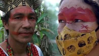 Photo of Amazon rainforest: 'Paying the price for disrespecting nature'
