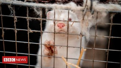 Photo of Fur industry faces uncertain future due to Covid