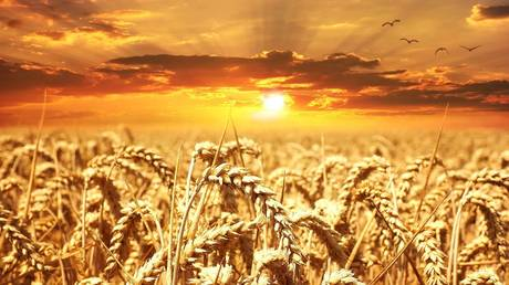 from-russia-with-wheat:-exports-by-global-grain-superpower-on-track-to-hit-record-high