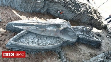 Photo of Thailand: Rare whale skeleton discovered