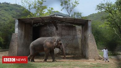 Photo of Kaavan, the world's loneliest elephant, is finally going free
