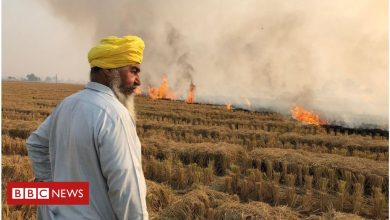 Photo of Stubble burning: Why it continues to smother north India