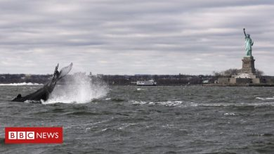 Photo of Humpback whale snapped during New York City harbour visit