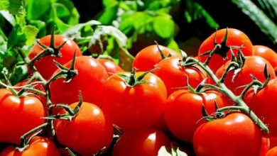 Photo of Russia bans imports of tomatoes & apples from Azerbaijan