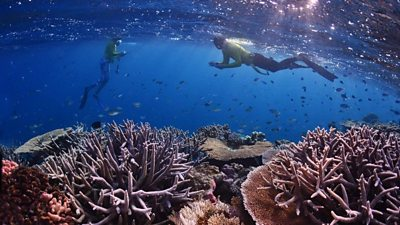 hundreds-of-volunteers-are-helping-to-map-the-great-barrier-reef