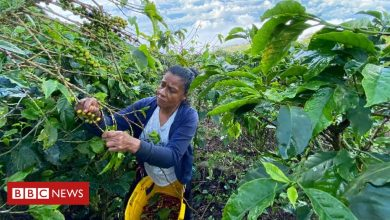 Photo of No pickers, no coffee: How Covid threatens Colombia's harvest