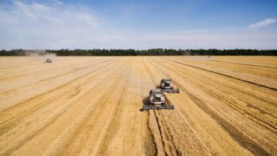Photo of Russia on track to have one of its largest-ever grain harvests