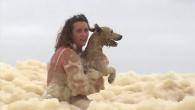 Photo of Australia storms: Dog rescued and beaches damaged as extreme weather hits coast
