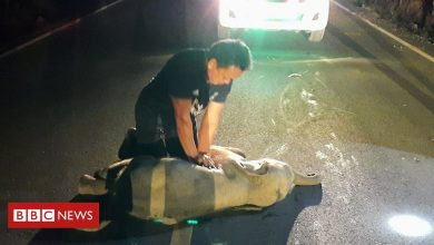 Photo of Thai man revives baby elephant with CPR after motorbike accident