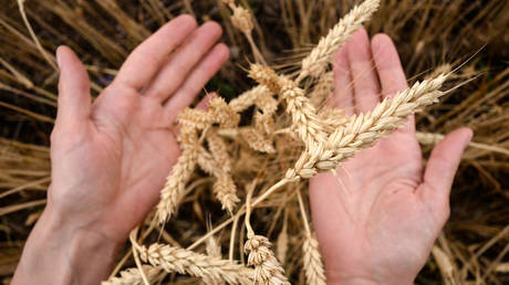 moscow-exchange-sows-seeds-of-potential-with-launch-of-wheat-futures-contracts