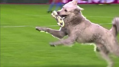 Photo of Dog invades football pitch in Bolivia