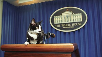 us-presidents'-pets:-biden-dogs-major-and-champ-to-restore-white-house-tradition