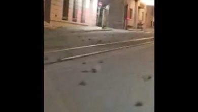 Photo of Hundreds of dead birds cover Rome street
