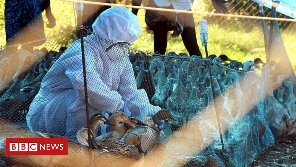 bird-flu:-india-to-cull-poultry-amid-fears-of-virus