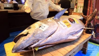 Photo of Covid-19 pandemic leaves New Year's tuna auction in Tokyo with no jaw-dropping bidding war & costly purchases