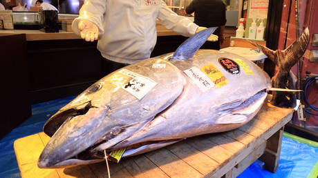 covid-19-pandemic-leaves-new-year's-tuna-auction-in-tokyo-with-no-jaw-dropping-bidding-war-&-costly-purchases