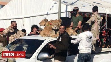 Photo of How six brothers – and their lions – terrorised a Libyan town