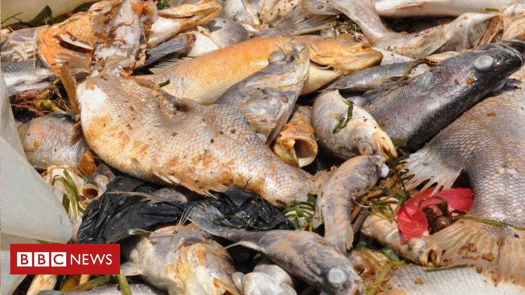 ugandans-warned-not-to-eat-dead-fish-washed-ashore