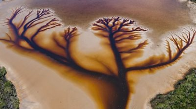 australia:-spectacular-'tree-of-life'-found-in-lake