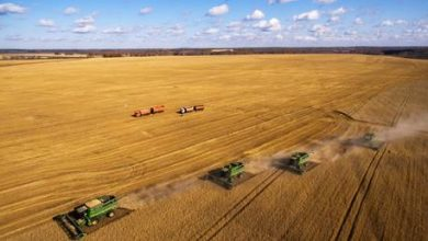 Photo of Russia keeps global grain supplies high despite Covid crisis