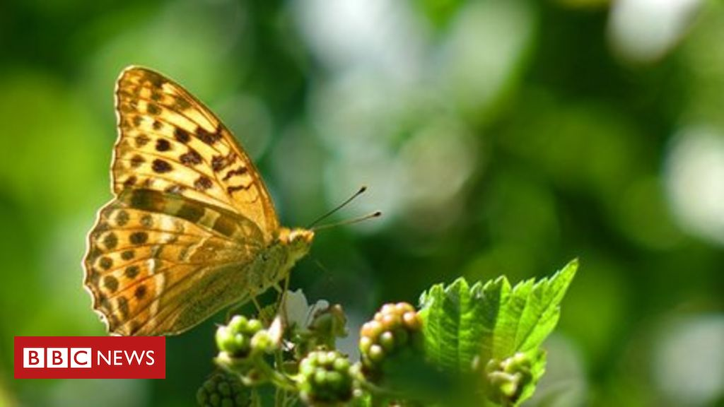 natural-wonder:-wing-'clap'-solves-mystery-of-butterfly-flight