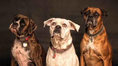 will-staff-'dog-collars'-that-buzz-be-the-new-workplace-accessory-in-coronavirus-era?-boom-bust-finds-out