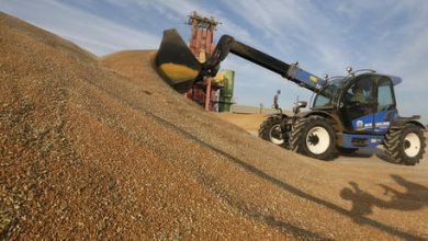 Photo of Sales of Russian wheat keep surging amid gloomy export forecasts