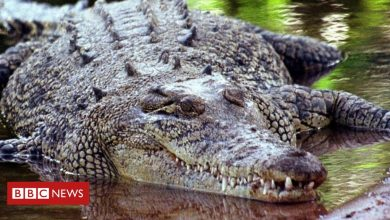 Photo of Australian man survives crocodile attack by 'prising jaws off his head'