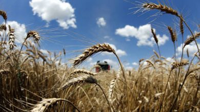 Photo of Russia needs regulations for grain exports to control rising food prices – Putin