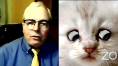 Photo of Cat filter: Texas lawyer on becoming 'internet sensation' after Zoom mishap