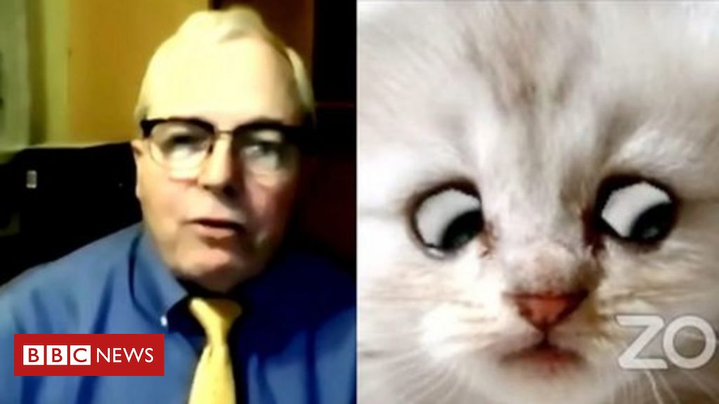 cat-zoom:-lawyer-rod-ponton-surprised-to-become-internet-star