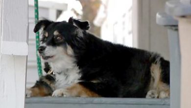 Photo of Lulu the dog inherits $5m from deceased US owner