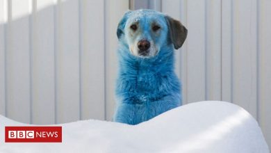 Photo of Russia's stray dogs with bright-coloured fur – pictures